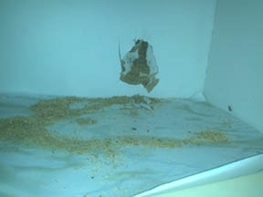 picture of carpenter ants damage and inspection