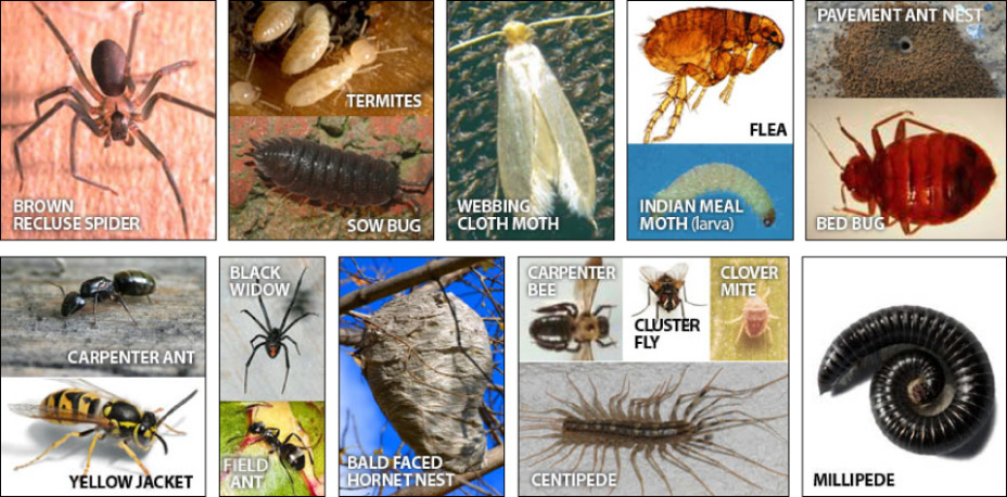 Pest identification chart